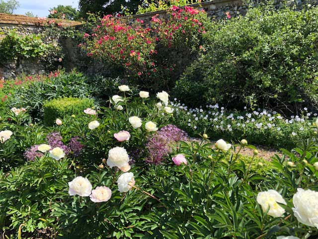 Paeonies, The Rose At The Back Is Rubrifolia